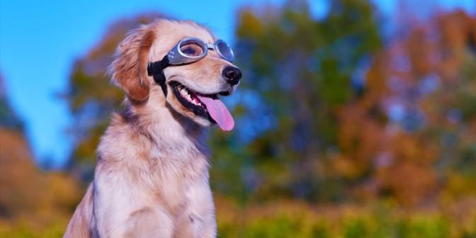 Muchos perros y gatos ya llevan gafas graduadas y una nueva investigación ha descubierto que algunos primates salvajes pierden visión con la edad