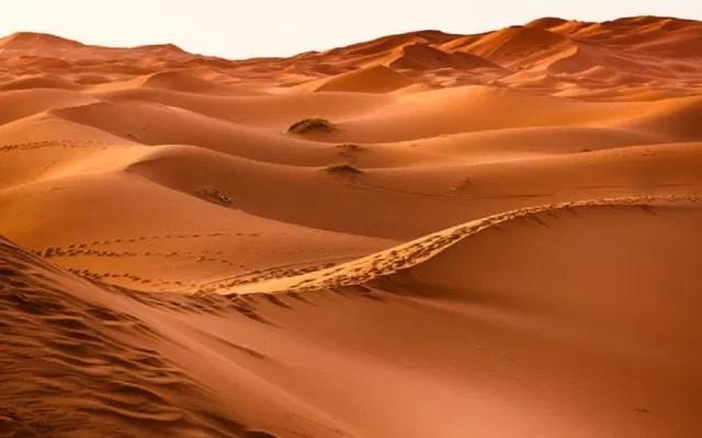 Argelia expulsa a migrantes al desierto del Sahara..
