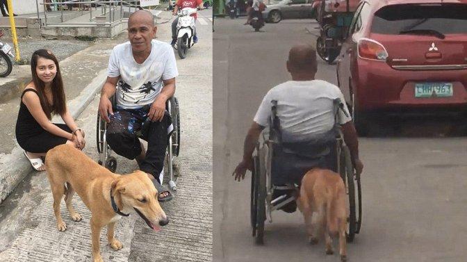 #Viral ➡️Perro ayuda a su dueño a empujar su silla de ruedas…