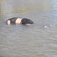Otro Migrante pierde la vida al intentar cruzar el Río Bravo...