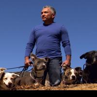 """César Millán afirma que """"Los perros callejeros son las mejores mascotas"""""""