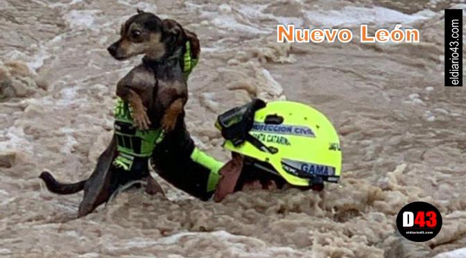 Rescatan a hombre y su perro en el río SantaCatarina..